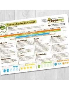 Guía Cultivo de Acelgas