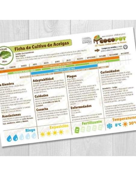 Guía Cultivo de Acelgas COCOPOT - 1