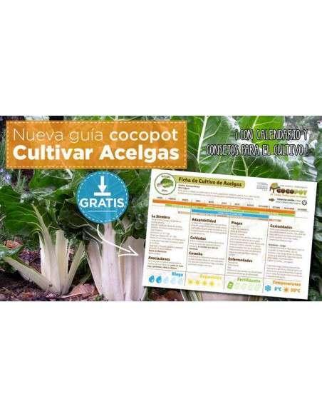 Guía Cultivo de Acelgas COCOPOT - 2