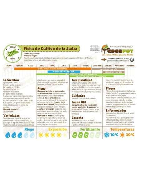 Semillas de Judía Plana Primo 100g. INTERSEMILLAS - 3