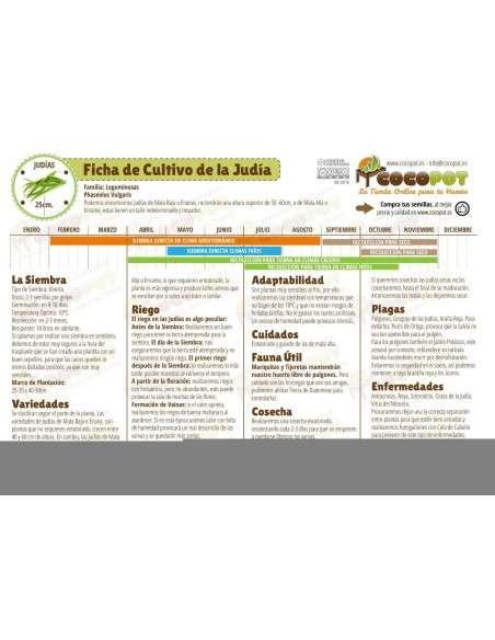 Semillas de Judía Verde Gator Green 100g. INTERSEMILLAS - 3