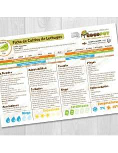 Guía Cultivo de Lechugas
