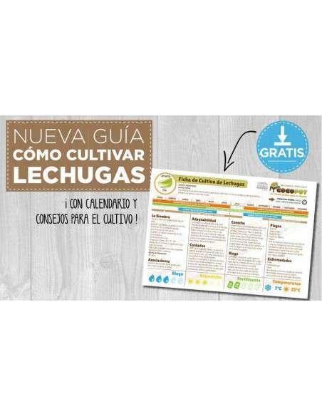 Semillas de Lechuga Cogollo de Tudela 8gr. INTERSEMILLAS - 3