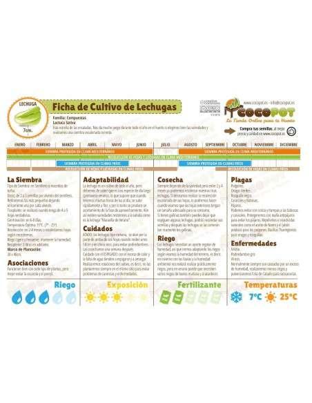 Semillas de Lechuga Cogollo de Tudela 8gr. INTERSEMILLAS - 4