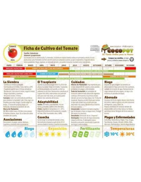 Semillas Tomate San Marzano Ecológicas INTERSEMILLAS - 4