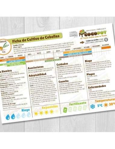 Guía Cultivo de Cebollas