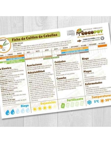 Guía Cultivo de Cebollas COCOPOT - 1