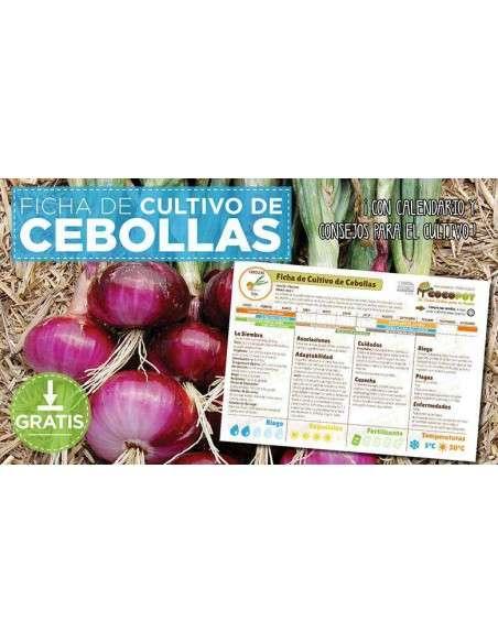 Guía Cultivo de Cebollas COCOPOT - 2