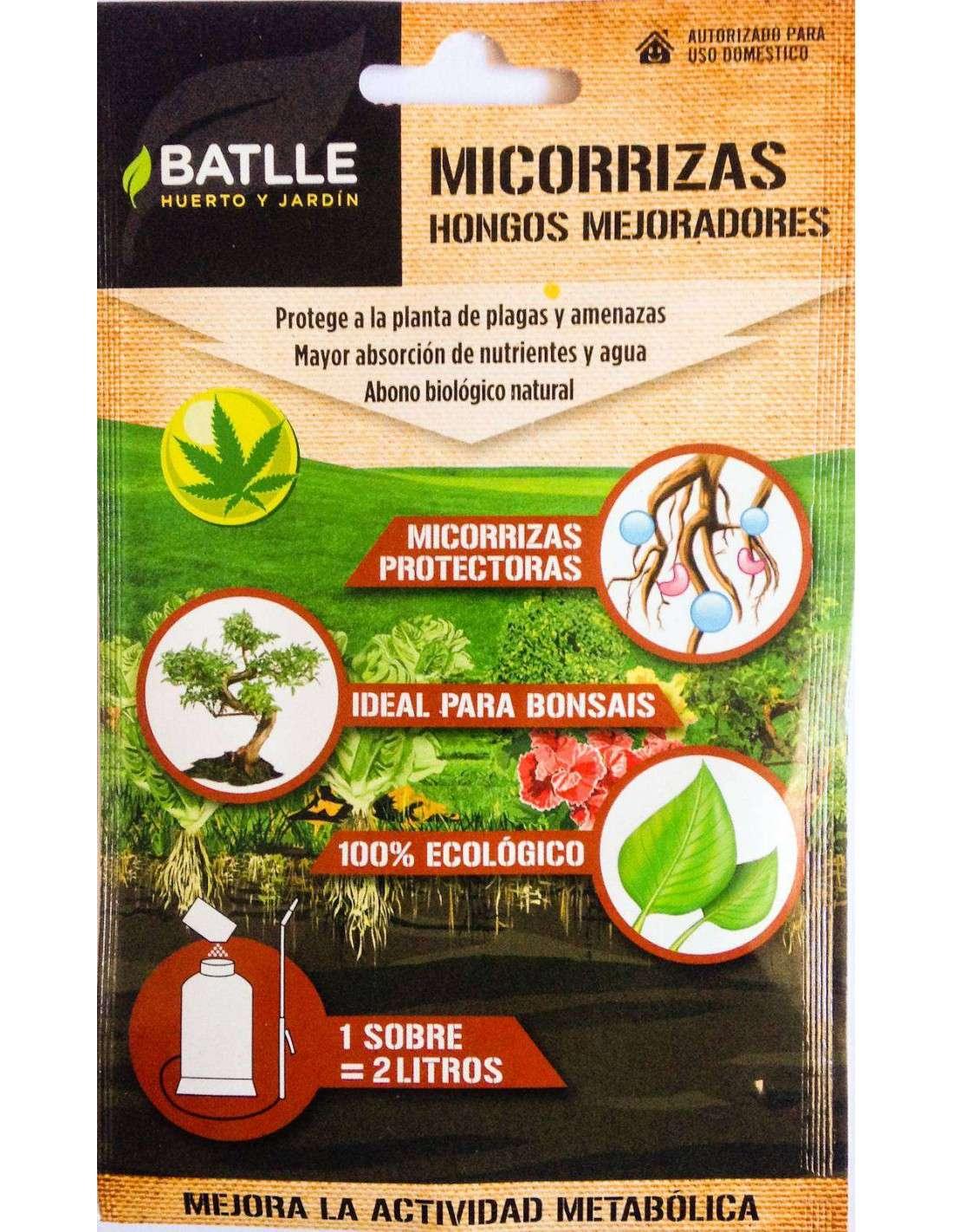 Micorrizas hongos mejoradores cocopot huerto y jard n for Hongos en las plantas de jardin