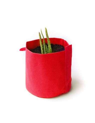 Kit Aloe Vera en maceta Roja de 1,3l.