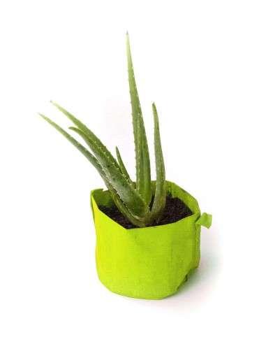 Kit Aloe Vera en maceta Verde de 2l. COCOPOT - 1