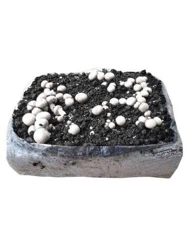 venta bala cultivo de champiñones en cocopot