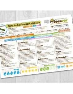 Guía Cultivo del Calabacín COCOPOT - 1