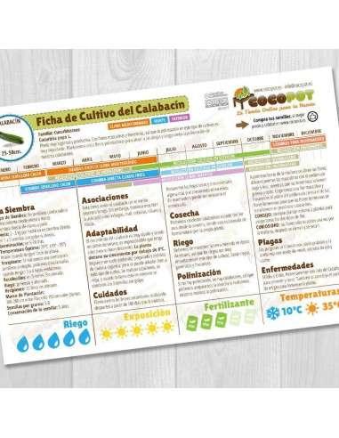 Guía Cultivo del Calabacín