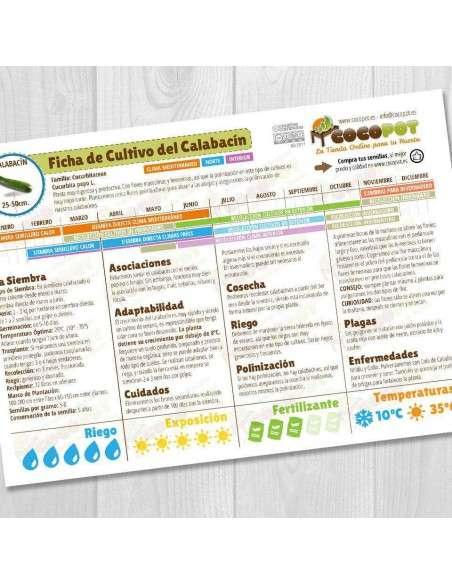 Semillas de Calabacín Belleza Negra Ecológicas 5gr. INTERSEMILLAS - 3