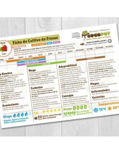 Guía Cultivo de Fresas