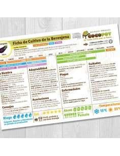 Guía Cultivo de Berenjenas