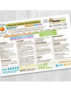 Guía Cultivo de Calabaza