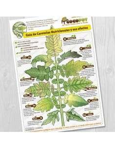 Lámina Guía Carencias Nutricionales