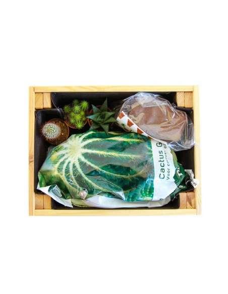 Kit cultivo Cáctus en Caja de Madera COCOPOT - 2