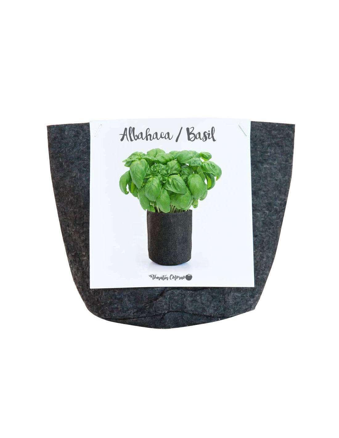 Kit maceta de albahaca ecol gica cocopot huerto for Cultivo de albahaca en interior