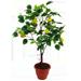 venta arboles frutales