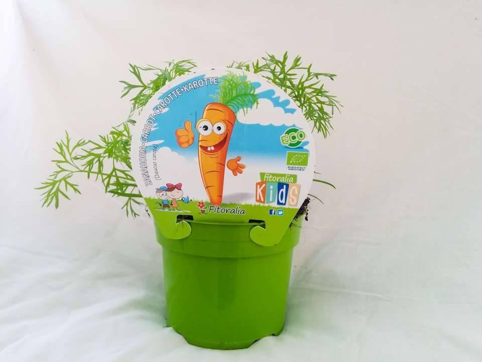 Tienda de plantel para ni os en cocopot huerto y jard n for Jardin vertical de fieltro en formato kit