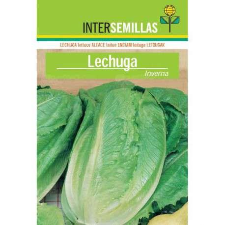 Comprar semillas de lechugas ofertas online en cocopot for Jardin vertical de fieltro en formato kit