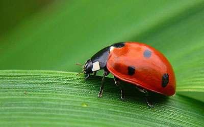 insectos buenos huerto
