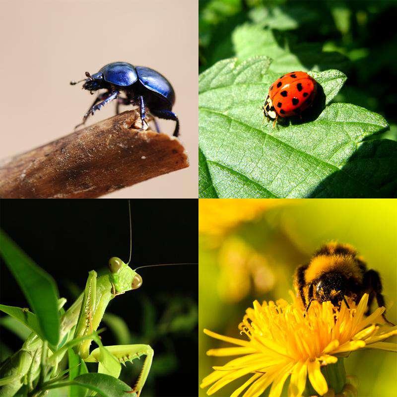 Insectos beneficiosos para el huerto blog cocopot huerto - Plantas para ahuyentar insectos ...
