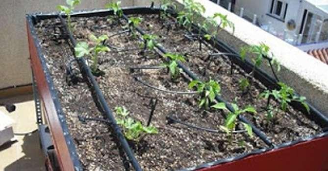 cómo hacer riego por goteo cocopot huerto y jardín