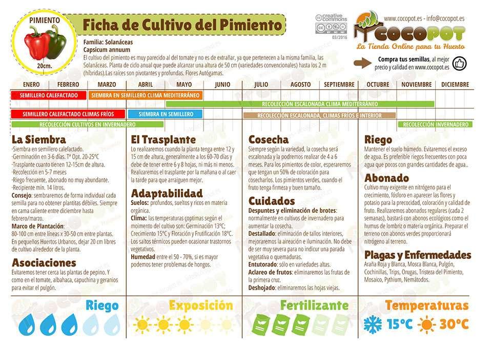 Semillas ecol gicas pimiento verde solo 1 6 en cocopot for Cultivo pimiento huerto urbano