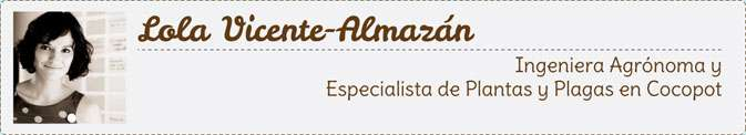 artículo Lola Vicente-Almazán huerto urbano cocopot