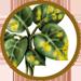 Fungicida ecologico