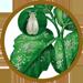Insecticida ecologico