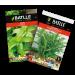 semillas aromaticas