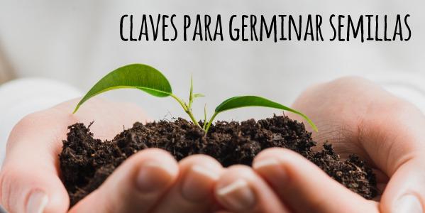 Cómo germinar semillas de tomate, lechuga, pimiento