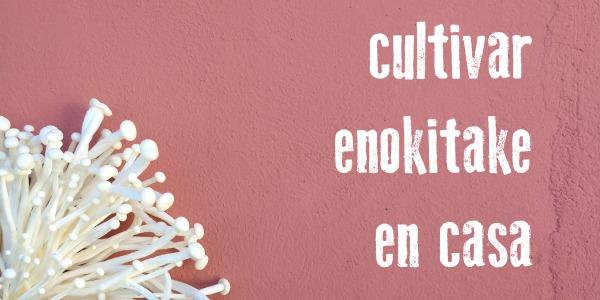 Cómo cultivar las setas Enokitake de forma fácil en casa