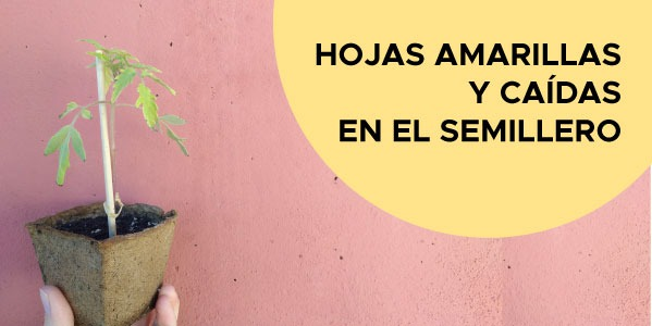 Problemas en el Semillero de Tomates, Pimientos, Berenjenas...