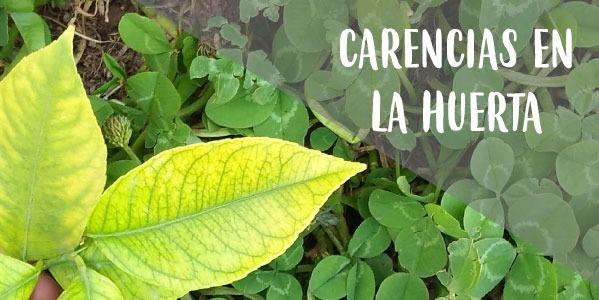 Cómo reconocer las carencias nutricionales de las plantas del huerto y jardín.