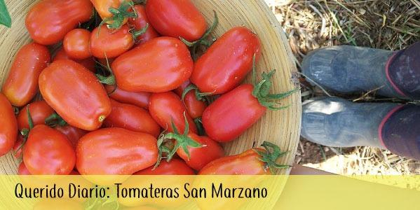 Diario de Campo de las Tomate San Marzano