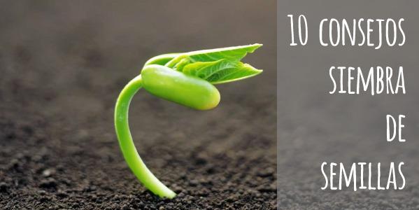 10 consejos para cultivar a partir de semillas